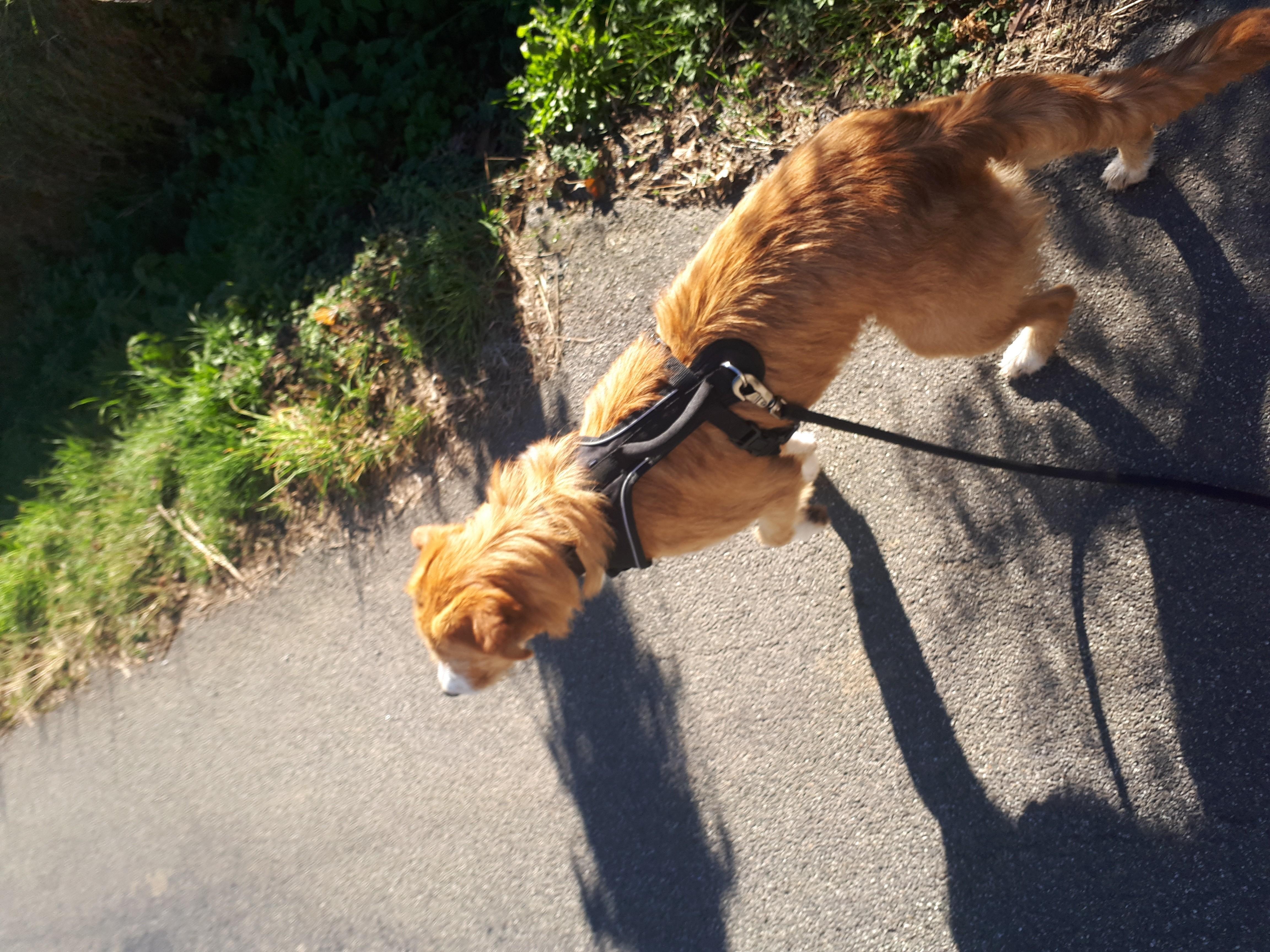 Harnais EasySport - Harnais pour chien - Petsafe / wanimo