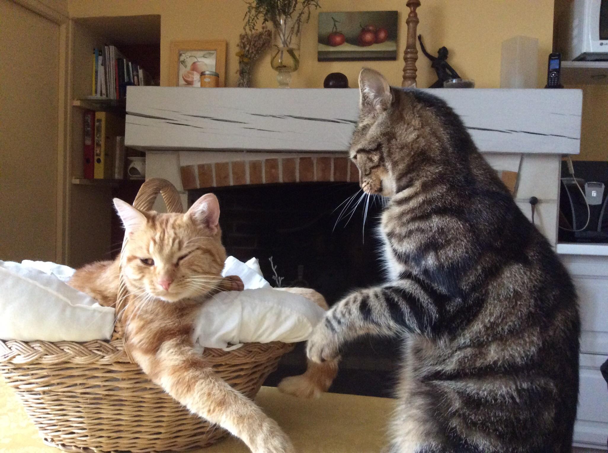 Ciseaux coupe griffes toilettage pour chat zolux wanimo - A quel age couper les griffes d un chat ...