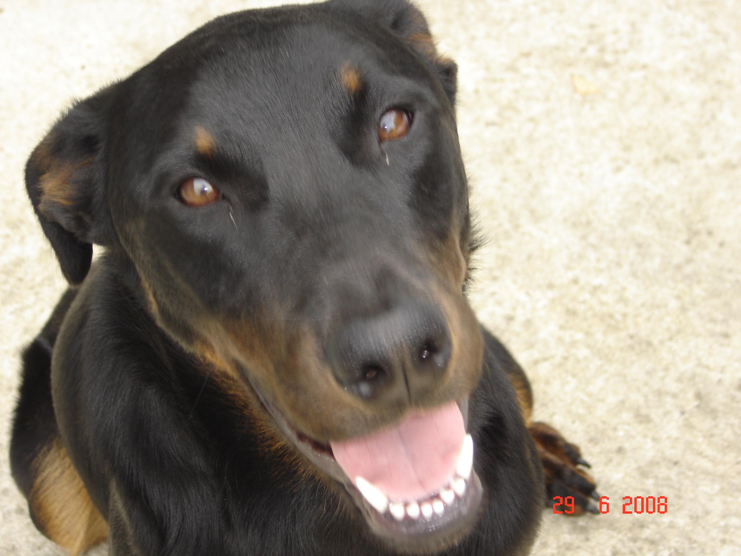 Royal canin size nutrition croquettes pour chien maxi dermaconfort wanimo - Comparatif croquettes chien 60 millions ...
