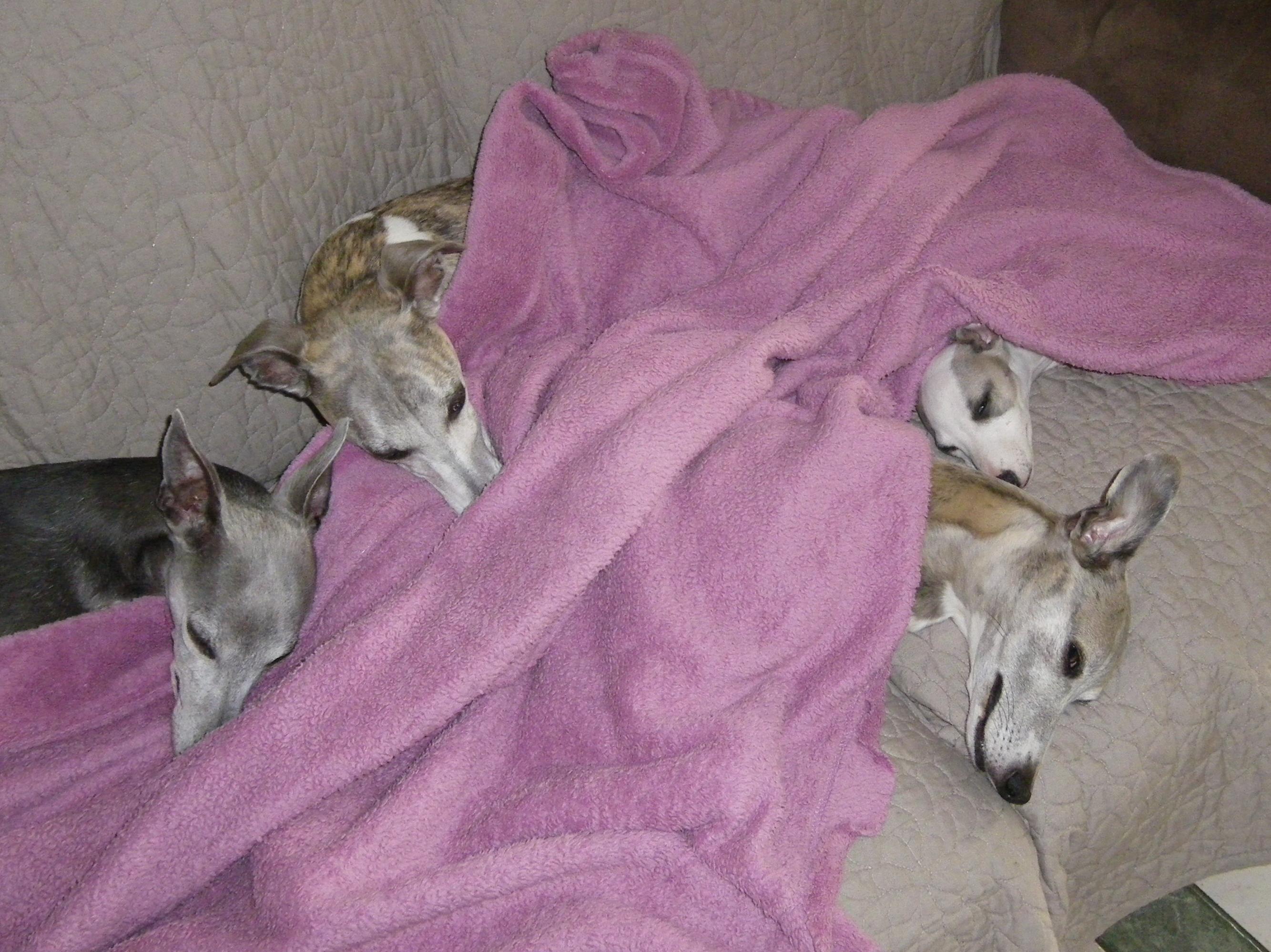 Nutro natural choice croquettes pour chiens adulte all g agneau et riz wanimo - Comparatif croquettes chien 60 millions ...