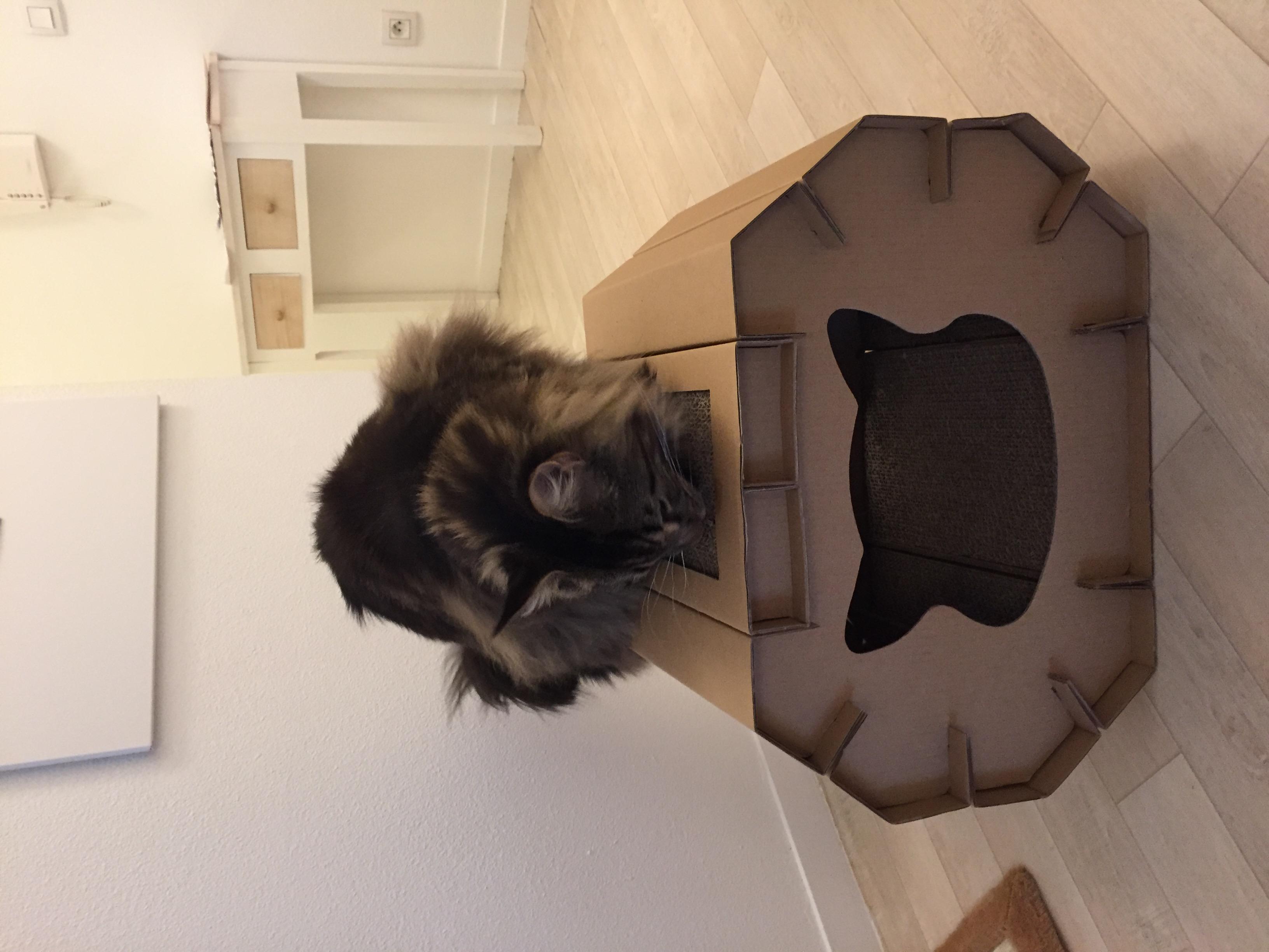Maison griffoir cat love griffoir cachette cat it wanimo - Griffoir chat fait maison ...